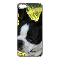 Boston Terrier Puppy Apple iPhone 5 Case (Silver)