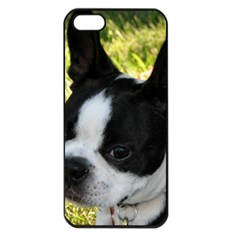 Boston Terrier Puppy Apple iPhone 5 Seamless Case (Black)
