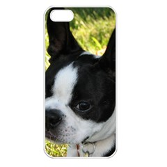 Boston Terrier Puppy Apple iPhone 5 Seamless Case (White)