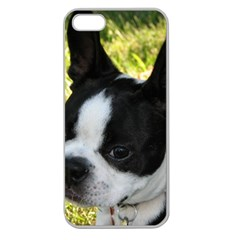 Boston Terrier Puppy Apple Seamless iPhone 5 Case (Clear)