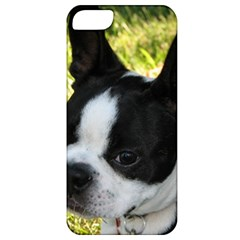 Boston Terrier Puppy Apple iPhone 5 Classic Hardshell Case