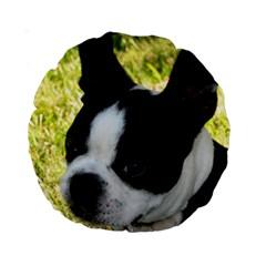 Boston Terrier Puppy Standard 15  Premium Round Cushions