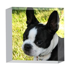 Boston Terrier Puppy 5  x 5  Acrylic Photo Blocks