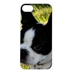 Boston Terrier Puppy Apple iPhone 5S/ SE Hardshell Case