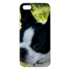 Boston Terrier Puppy iPhone 5S/ SE Premium Hardshell Case