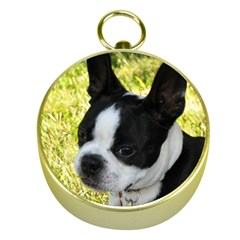 Boston Terrier Puppy Gold Compasses