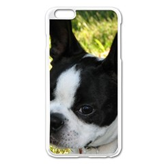 Boston Terrier Puppy Apple iPhone 6 Plus/6S Plus Enamel White Case
