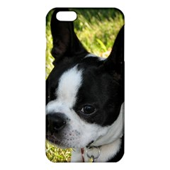 Boston Terrier Puppy iPhone 6 Plus/6S Plus TPU Case