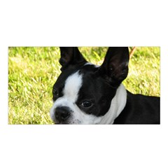 Boston Terrier Puppy Satin Shawl