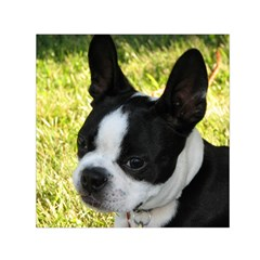Boston Terrier Puppy Small Satin Scarf (Square)