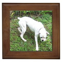 Boxer White Puppy Full Framed Tiles