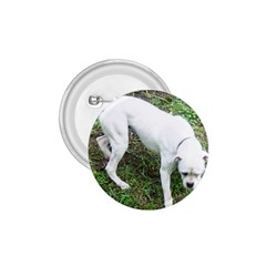 Boxer White Puppy Full 1.75  Buttons