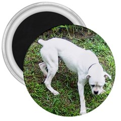 Boxer White Puppy Full 3  Magnets