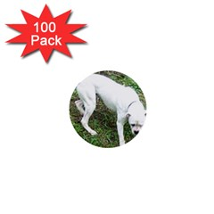 Boxer White Puppy Full 1  Mini Buttons (100 pack)