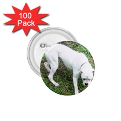 Boxer White Puppy Full 1.75  Buttons (100 pack)