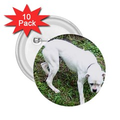 Boxer White Puppy Full 2.25  Buttons (10 pack)