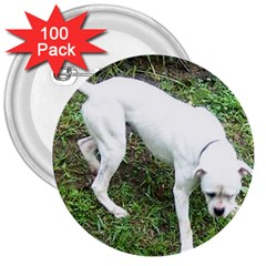 Boxer White Puppy Full 3  Buttons (100 pack)