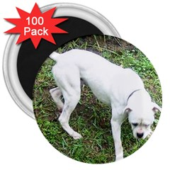 Boxer White Puppy Full 3  Magnets (100 pack)