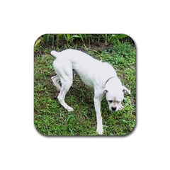 Boxer White Puppy Full Rubber Square Coaster (4 pack)