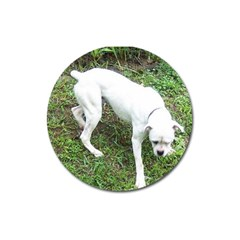 Boxer White Puppy Full Magnet 3  (Round)