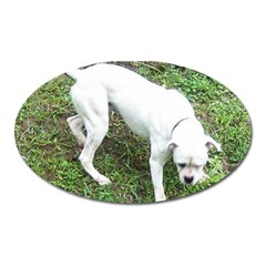 Boxer White Puppy Full Oval Magnet