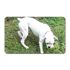 Boxer White Puppy Full Magnet (Rectangular)
