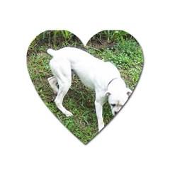 Boxer White Puppy Full Heart Magnet