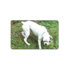 Boxer White Puppy Full Magnet (Name Card)
