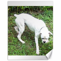 Boxer White Puppy Full Canvas 18  x 24