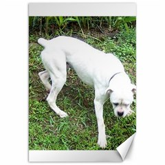 Boxer White Puppy Full Canvas 20  x 30