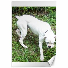Boxer White Puppy Full Canvas 24  x 36
