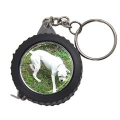 Boxer White Puppy Full Measuring Tapes