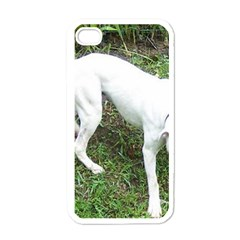 Boxer White Puppy Full Apple iPhone 4 Case (White)