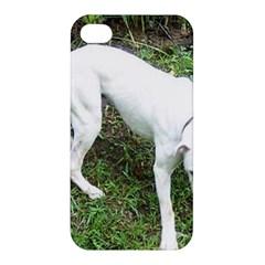 Boxer White Puppy Full Apple iPhone 4/4S Hardshell Case