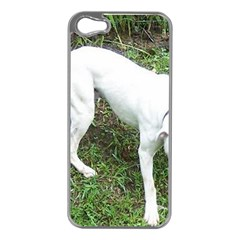 Boxer White Puppy Full Apple iPhone 5 Case (Silver)
