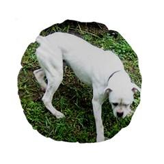 Boxer White Puppy Full Standard 15  Premium Round Cushions