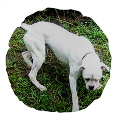 Boxer White Puppy Full Large 18  Premium Round Cushions
