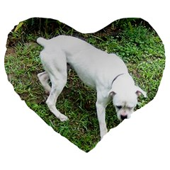 Boxer White Puppy Full Large 19  Premium Heart Shape Cushions