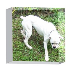 Boxer White Puppy Full 5  x 5  Acrylic Photo Blocks