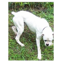 Boxer White Puppy Full Drawstring Bag (Large)