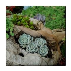 Plant Succulent Plants Flower Wood Tile Coasters