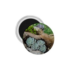 Plant Succulent Plants Flower Wood 1.75  Magnets