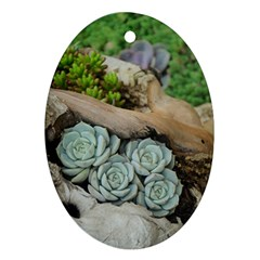 Plant Succulent Plants Flower Wood Ornament (Oval)