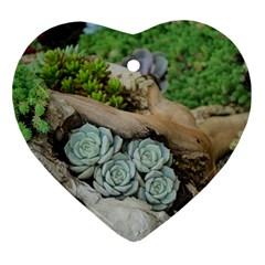 Plant Succulent Plants Flower Wood Ornament (Heart)