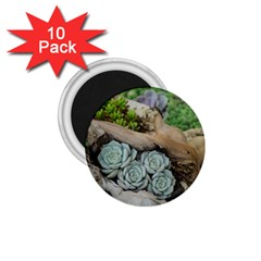 Plant Succulent Plants Flower Wood 1.75  Magnets (10 pack)