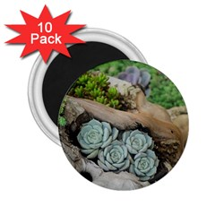 Plant Succulent Plants Flower Wood 2.25  Magnets (10 pack)