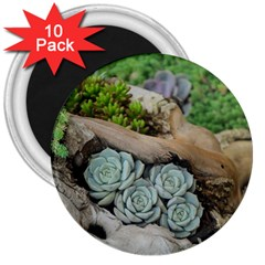 Plant Succulent Plants Flower Wood 3  Magnets (10 pack)