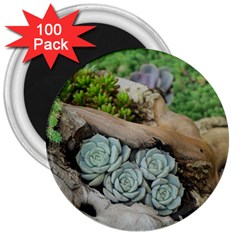Plant Succulent Plants Flower Wood 3  Magnets (100 pack)
