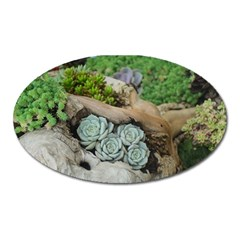 Plant Succulent Plants Flower Wood Oval Magnet