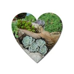 Plant Succulent Plants Flower Wood Heart Magnet